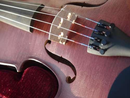 violon acajou